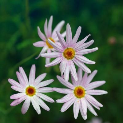 wpid4878-High-Summer-Garden-PANT011-nicola-stocken.jpg
