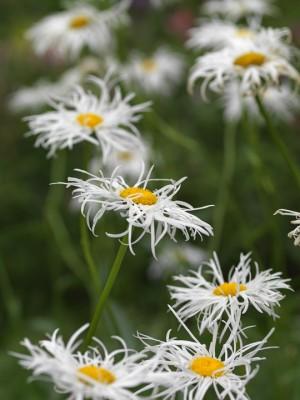 wpid4880-High-Summer-Garden-PLEU003-nicola-stocken.jpg