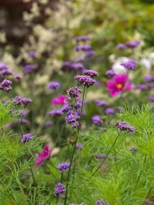 wpid4882-High-Summer-Garden-PVER049-nicola-stocken.jpg