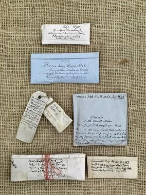wpid5018-Heritage-Seed-Library-GRUY010-nicola-stocken.jpg