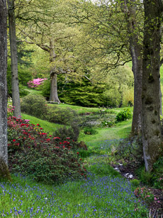 Thumbnail image for High Beeches in Spring