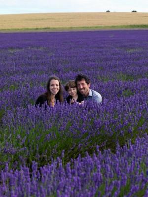 wpid5150-Hitchin-Lavender-GHLA003-nicola-stocken.jpg