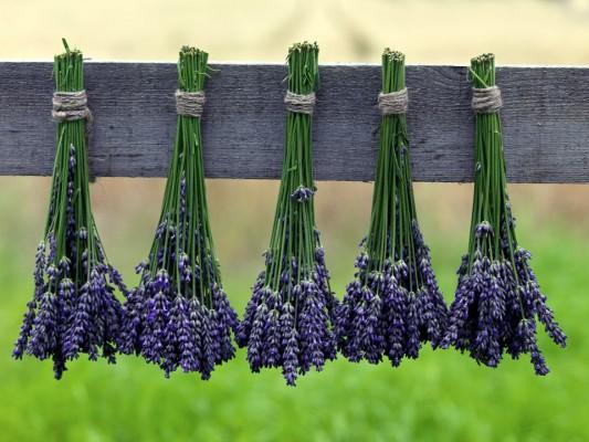 wpid5196-Hitchin-Lavender-GHLA030-nicola-stocken.jpg