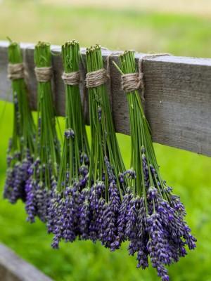 wpid5198-Hitchin-Lavender-GHLA031-nicola-stocken.jpg