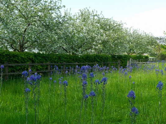 wpid5241-Holt-Farm-Spring-GHOF004-nicola-stocken.jpg