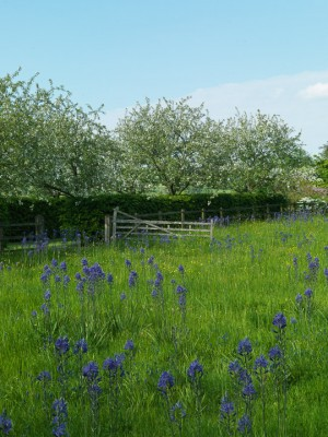 wpid5243-Holt-Farm-Spring-GHOF005-nicola-stocken.jpg