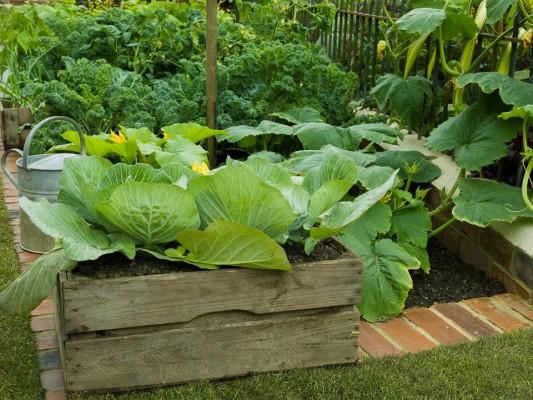 wpid5514-Kitchen-Gardens-DESI077-nicola-stocken.jpg