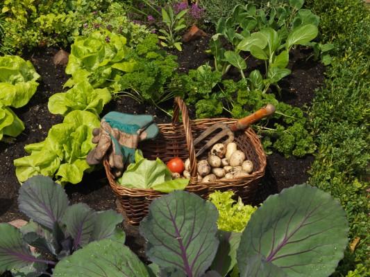 wpid5518-Kitchen-Gardens-DESI214-nicola-stocken.jpg