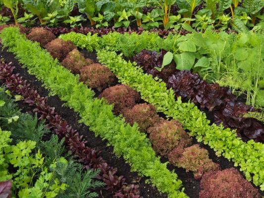 wpid5520-Kitchen-Gardens-DESI244-nicola-stocken.jpg