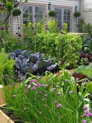 wpid5522-Kitchen-Gardens-DESI332-nicola-stocken.jpg