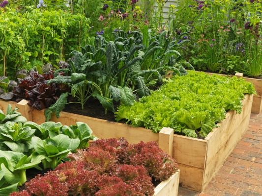 wpid5524-Kitchen-Gardens-DESI335-nicola-stocken.jpg