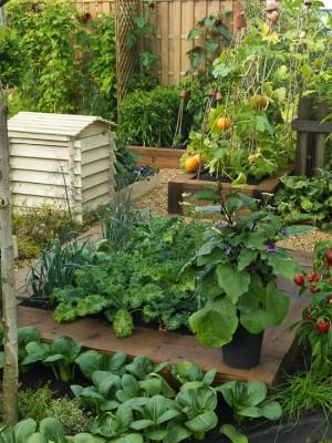 wpid5526-Kitchen-Gardens-DESI352-nicola-stocken.jpg