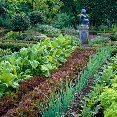 wpid5528-Kitchen-Gardens-DKIT078-nicola-stocken.jpg