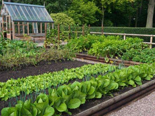 wpid5534-Kitchen-Gardens-FVEG072-nicola-stocken.jpg