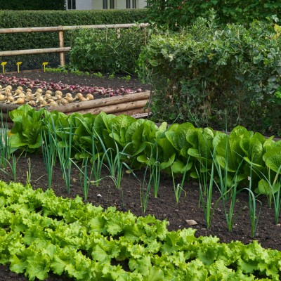 wpid5536-Kitchen-Gardens-FVEG073-nicola-stocken.jpg