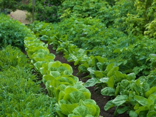 wpid5548-Kitchen-Gardens-GCOT087-nicola-stocken.jpg