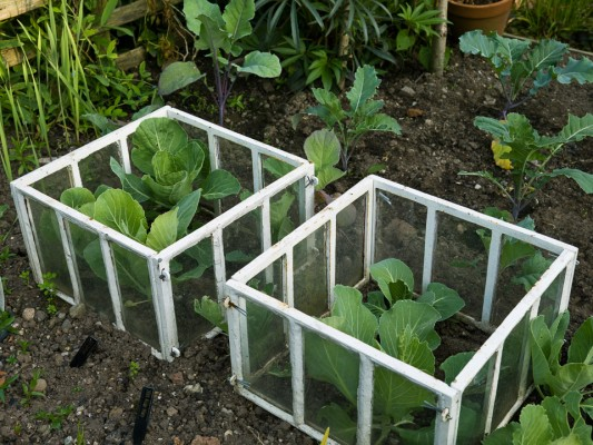 wpid5552-Kitchen-Gardens-GDIA087-nicola-stocken.jpg