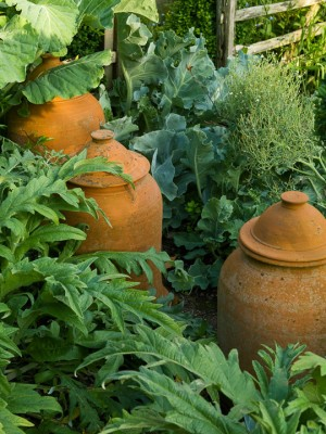 wpid5554-Kitchen-Gardens-GDIA088-nicola-stocken.jpg