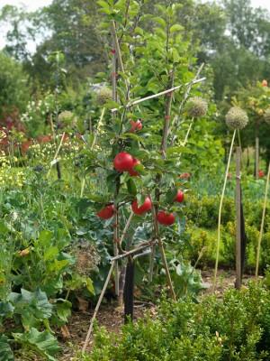 wpid5558-Kitchen-Gardens-GDOW063-nicola-stocken.jpg