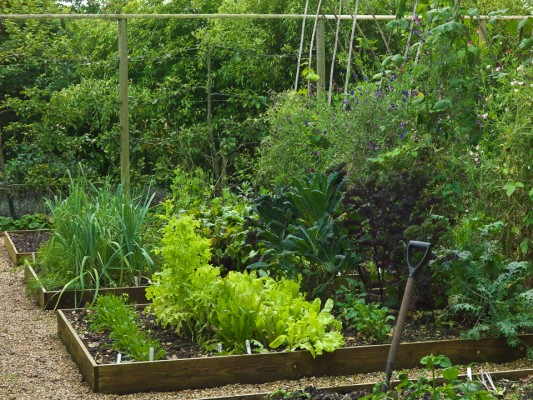 wpid5562-Kitchen-Gardens-GGPE046-nicola-stocken.jpg