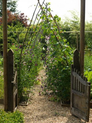 wpid5564-Kitchen-Gardens-GGPE047-nicola-stocken.jpg