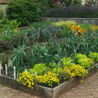wpid5566-Kitchen-Gardens-GHOF085-nicola-stocken.jpg