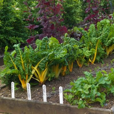 wpid5570-Kitchen-Gardens-GHOF090-nicola-stocken.jpg