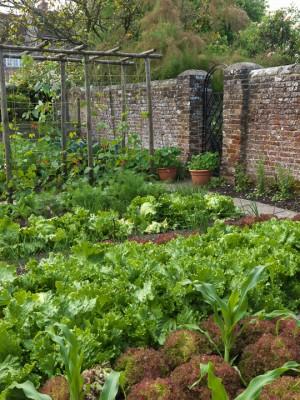 wpid5576-Kitchen-Gardens-GMHB008-nicola-stocken.jpg