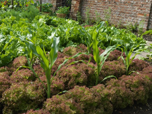 wpid5578-Kitchen-Gardens-GMHB010-nicola-stocken.jpg
