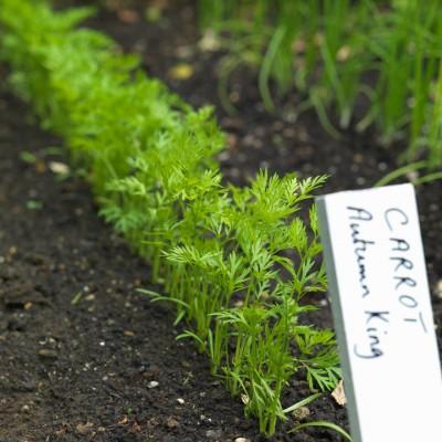 wpid5582-Kitchen-Gardens-GNET049-nicola-stocken.jpg