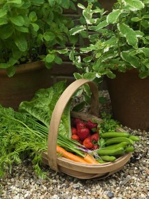 wpid5586-Kitchen-Gardens-GNET053-nicola-stocken.jpg