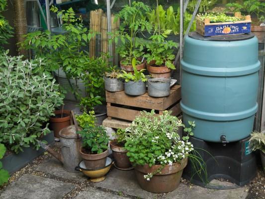 wpid5588-Kitchen-Gardens-GPIT026-nicola-stocken.jpg
