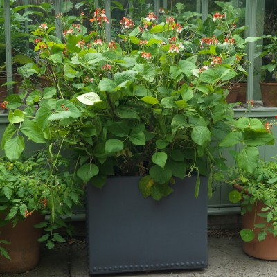 wpid5600-Kitchen-Gardens-GVIN045-nicola-stocken.jpg