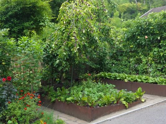 wpid5602-Kitchen-Gardens-GWAL053-nicola-stocken.jpg