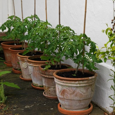 wpid5604-Kitchen-Gardens-GWAT023-nicola-stocken.jpg