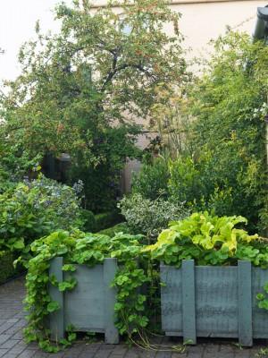 wpid5606-Kitchen-Gardens-GWET008-nicola-stocken.jpg