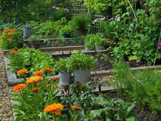 wpid5610-Kitchen-Gardens-GWOM036-nicola-stocken.jpg