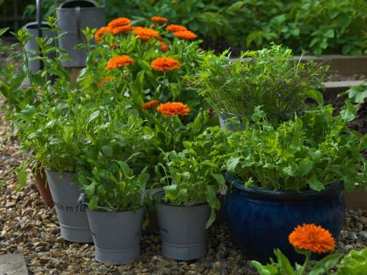 wpid5612-Kitchen-Gardens-GWOM044-nicola-stocken.jpg