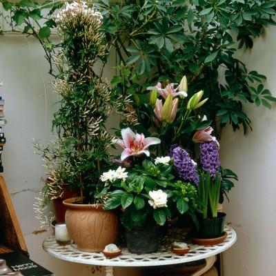 wpid5662-Lily-Plant-Profile-DCON045-nicola-stocken.jpg