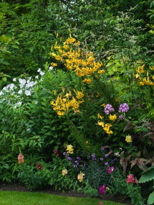 wpid5670-Lily-Plant-Profile-GBOX088-nicola-stocken.jpg