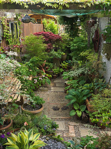 Thumbnail image for Lincoln Road Garden in May