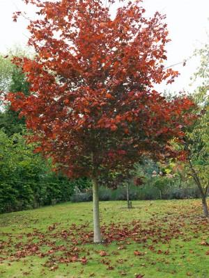 wpid5795-Maryfield-Garden-GMAY019-nicola-stocken.jpg