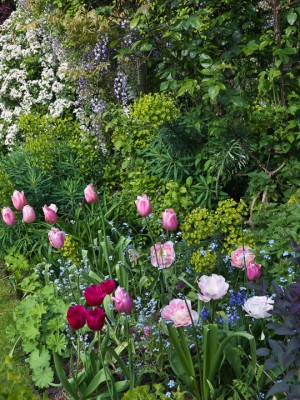 wpid5956-Chiswick-Garden-GORC025-nicola-stocken.jpg