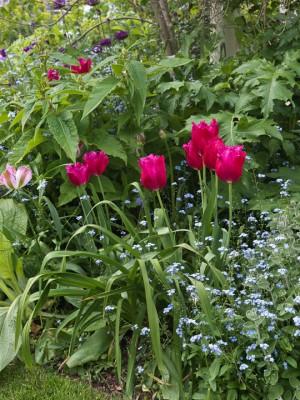 wpid5958-Chiswick-Garden-GORC026-nicola-stocken.jpg