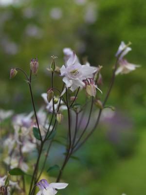 wpid5970-Chiswick-Garden-PAQU040-nicola-stocken.jpg