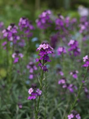 wpid5972-Chiswick-Garden-PERY055-nicola-stocken.jpg