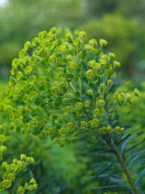 wpid5976-Chiswick-Garden-SEUP015-nicola-stocken.jpg