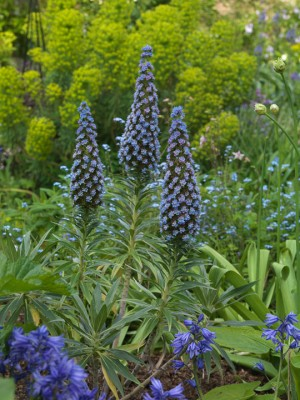 wpid5978-Chiswick-Garden-XECH009-nicola-stocken.jpg