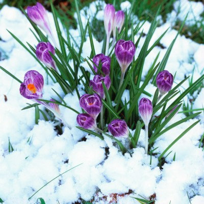 wpid7140-Tough-Winter-Flowers-BCRO018-nicola-stocken.jpg