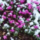 wpid7144-Tough-Winter-Flowers-BCYC025-nicola-stocken.jpg thumbnail